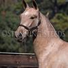 StunningSteedsPhoto-HR-2907