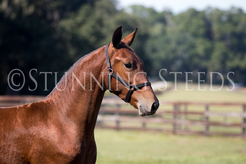 StunningSteedsPhoto-HR-2780