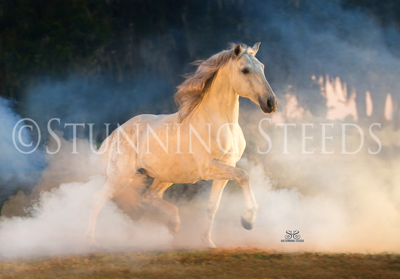 StunningSteedsPhoto-0884-tu