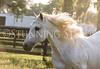 StunningSteedsPhoto-7292