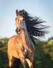 CHERI-PRILL-PHOTO-7245-crp