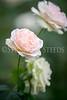 StunningSteedsPhoto-1215