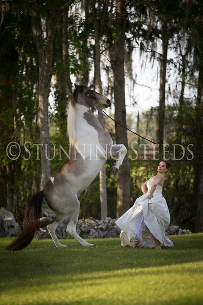 StunningSteedsPhoto-HR-3469