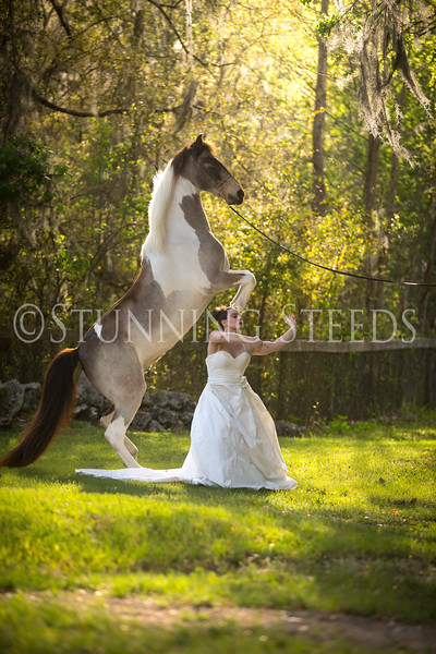 StunningSteedsPhoto-HR-3496