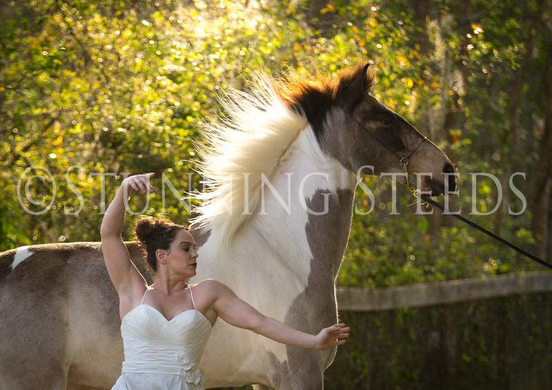 StunningSteedsPhoto-HR-3505