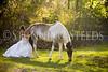 StunningSteedsPhoto-HR-3652
