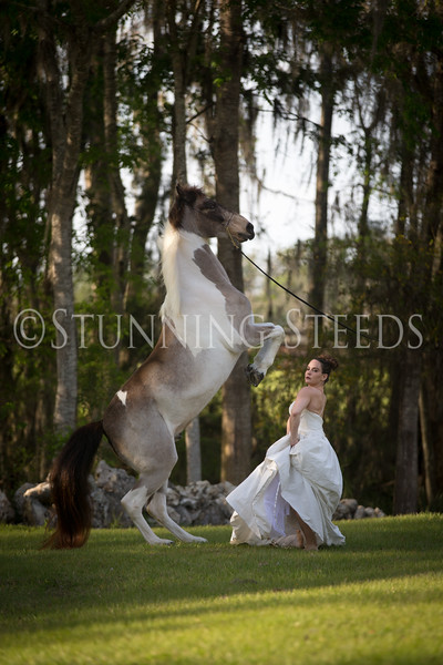 StunningSteedsPhoto-HR-3474