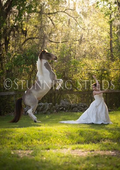 StunningSteedsPhoto-HR-3482