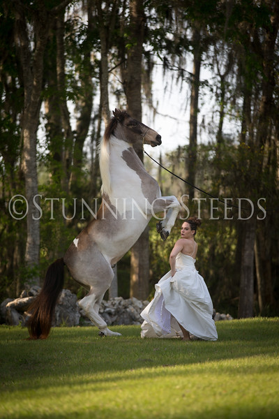 StunningSteedsPhoto-HR-3476