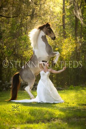 Pony - Andalusian Saddlebred Cross