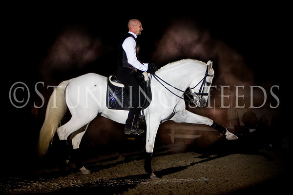 Misc Andalusians