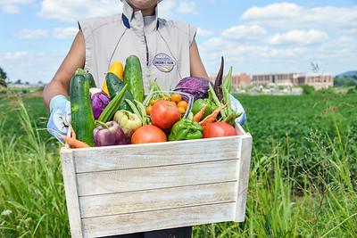 Farm Produce Basket
