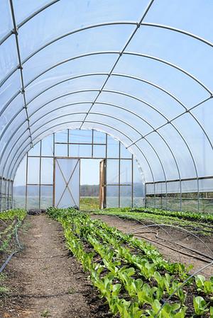 1779-Farm-FirstCrops-09