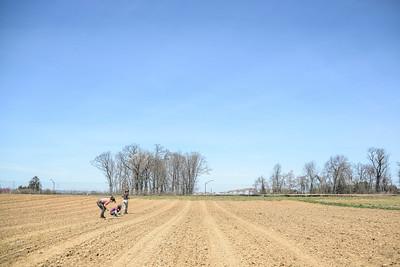 1779-Farm-FirstCrops-24