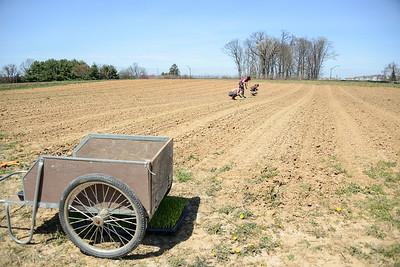 1779-Farm-FirstCrops-23