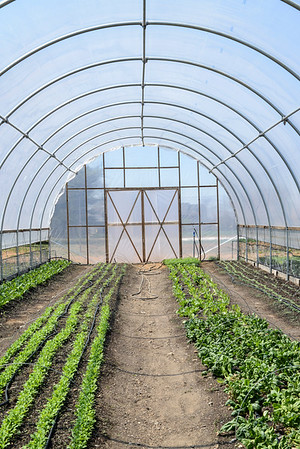 1779-Farm-FirstCrops-06