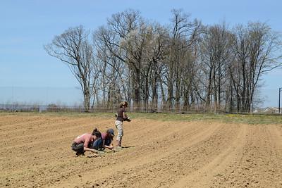 1779-Farm-FirstCrops-26