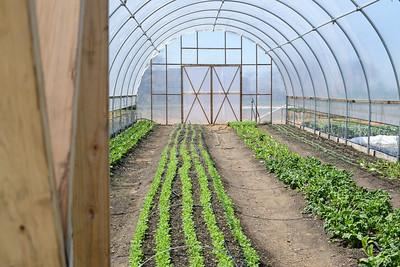 1779-Farm-FirstCrops-12