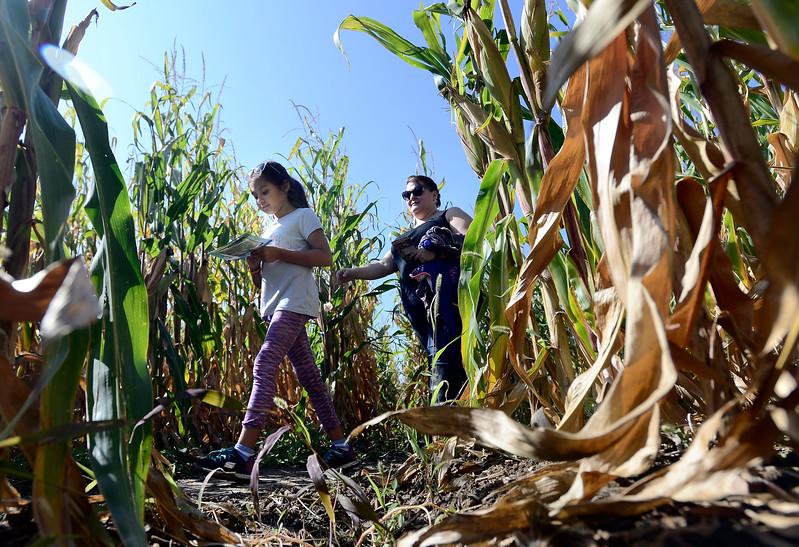 Anderson Farms Corn Maze