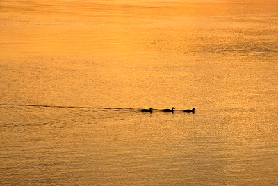 Just Ducky Sunrise Cruise
