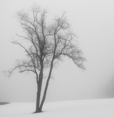Tree and Fog / Hartland, Vermont
