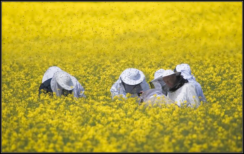 Imkers/Beekeepers