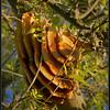 Natuurlijk bijennest/Natural beehive