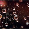 Regendruppels/Raindrops