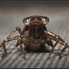 Glassnijder/Hairy Dragonfly