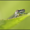 Variabele waterjuffer/Variable Bluet