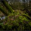Mossen/Mosses