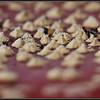 Vliegenzwam/Fly agaric