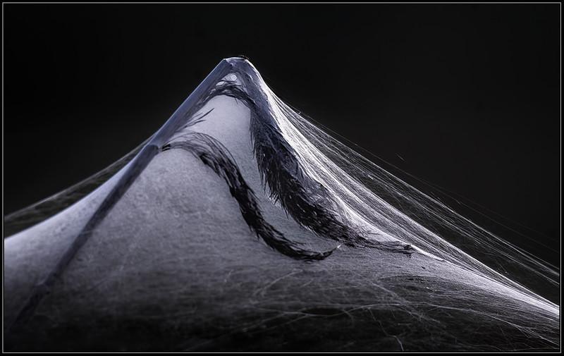 Spinsel/Silk