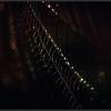 Spinnenweb/Spiderweb