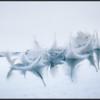 Veren/Feathers
