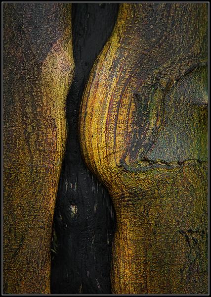 Structuur boomschors/Structure tree bark