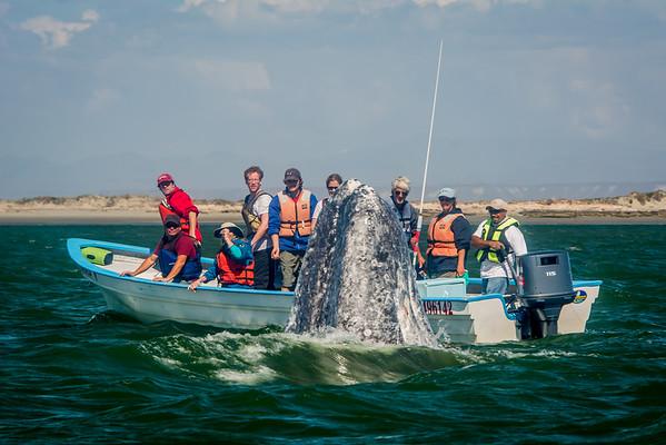 Andiamo-Travel Whale Tour Vibrance