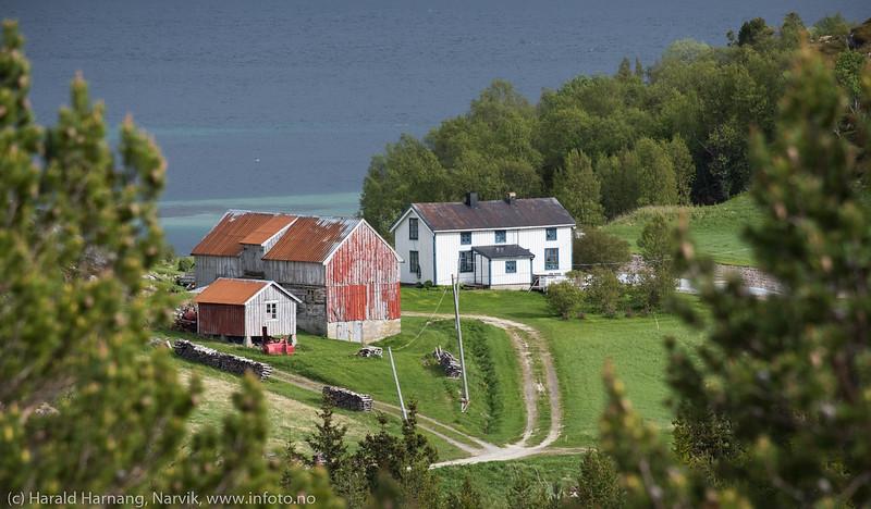 Rødøya i Efjord