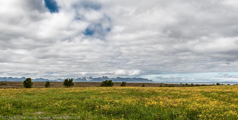 Andøya, i nærheten av Bø på yttersiden.