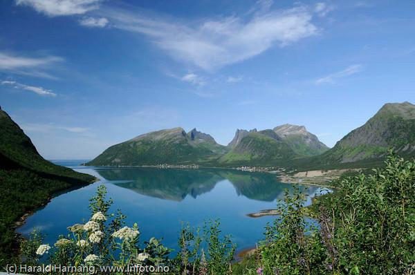 Senja: Bergsfjorden.