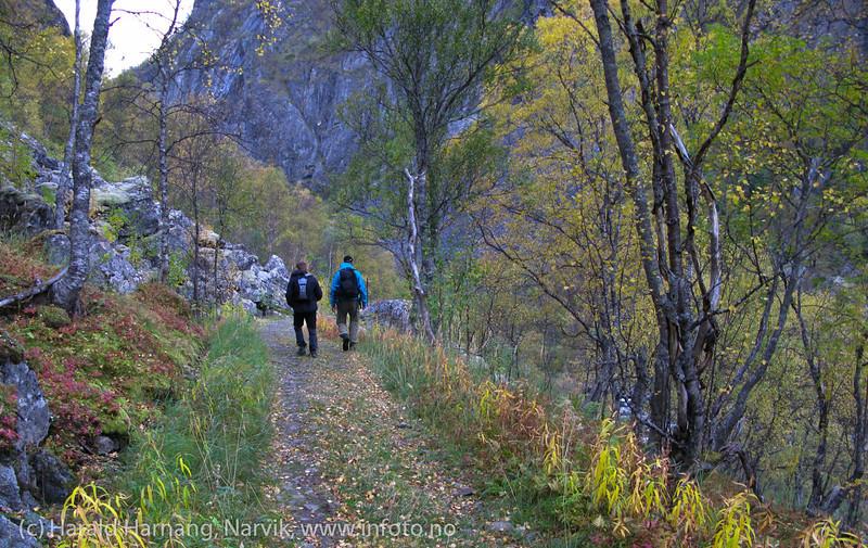 Rallarveien. På tur ned mellom nedre Hunddalen og Rombaksbotn. Hunddalselva til høyre. Sept 2011.
