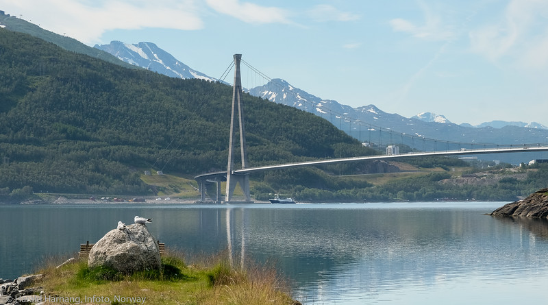 Hålogalandsbrua. Turistbåt passerer under på vei til Rombaksbotn. To måker i forgrunnen. Foto fra Slåttvika, der det i sin tid var fergekai på sambandet Øyjord-Narvik. Foto 5. juli 2021.