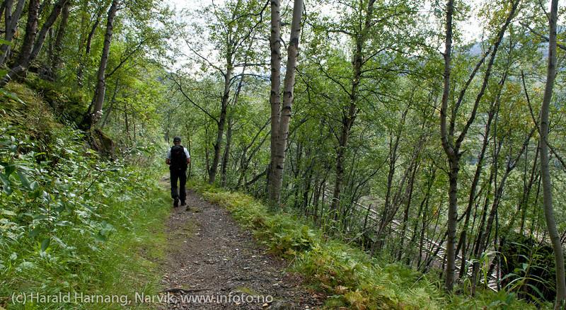 Rallarveien. På tur ned Fagerlia. Ofotbanen går rett nedenfor. sept 2011.