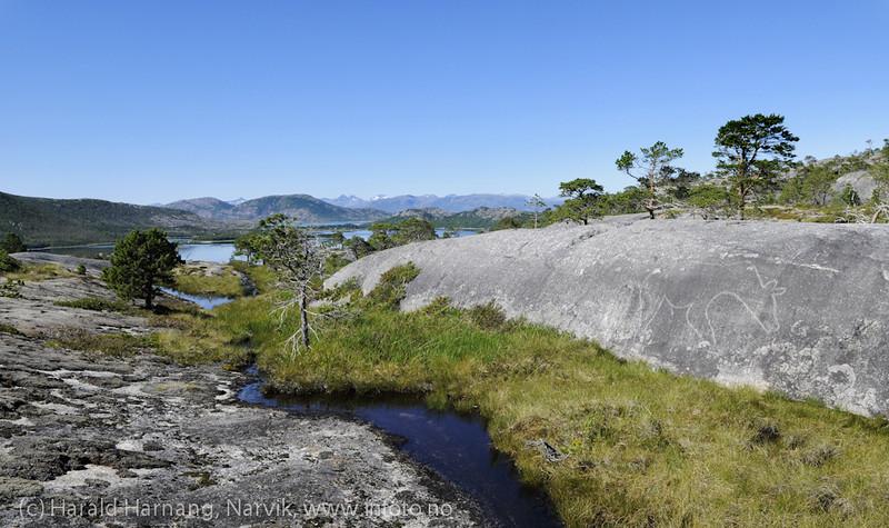 Helleristning i Efjord, Ballangen kommune, sørside, ved Vallebukta. Bjørn og sjøpattedyr fra yngre steinalder.