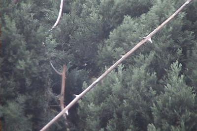 Andrew in Tree