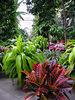 Botanic Garden in DC