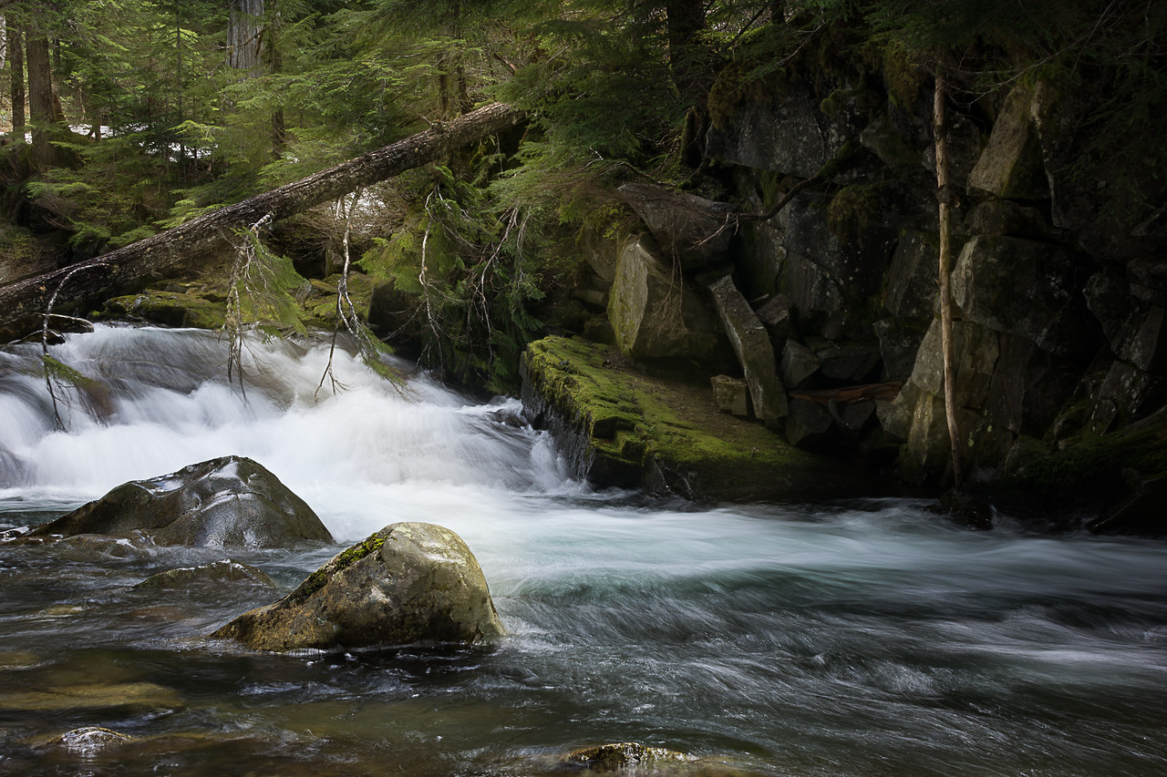 Stream, Mt. Rainier National Park