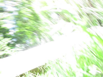 Summer 2016- Berkshires