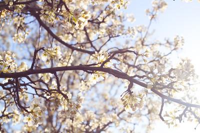Blossomness