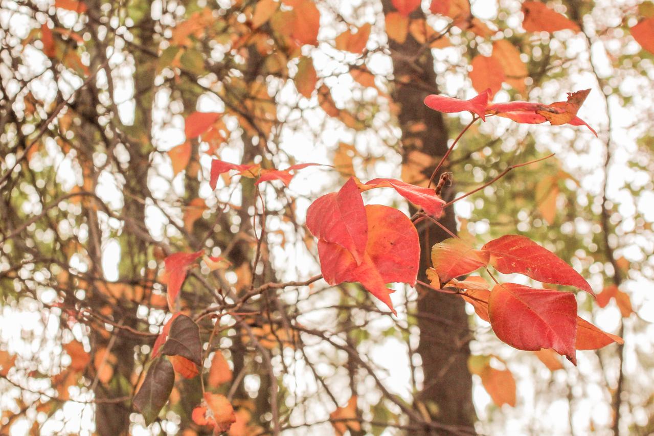 Soft fall